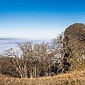 Bald Hills Vista Panorama by Greg Nyquist