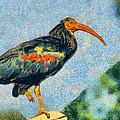 Bald Ibis by George Rossidis