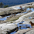 Bald Rock Lookout by Robert Woodward
