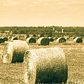 Baled And Ready by Cheryl Baxter