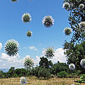 Balls by Eric Kempson