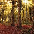 Ballyannan Wood by Michael Walsh