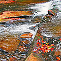 Balsam River Rocks And Leaves by Cynthia McCullough