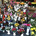 Baltic Flower Shop by Gerald Blaine