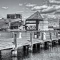 Baltimore Inner Harbor Skyline Vi by Clarence Holmes