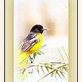 Baltimore Oriole 4348-11 - Bird by Travis Truelove