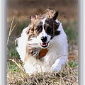 Bama - Pets - Dogs by Travis Truelove