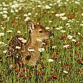 Bambi 2 by Jack Milchanowski