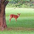 Bambi Days by Art Dingo
