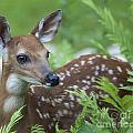Bambi by Emma England