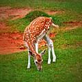 Bambi by Tara Potts