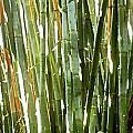 Bamboo Abstract by Rich Franco