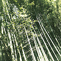 Bamboo Abstract by Yen