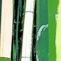 Bamboo Abstraction by Ben and Raisa Gertsberg