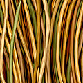 Bamboo Canes by Brenda Bryant