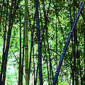 Bamboo by Carolyn Stagger Cokley