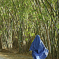 Bamboo by Christian Heeb