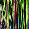Bamboo Dream by Ed Weidman