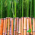 Bamboo Fence by Julia Ivanovna Willhite