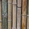Bamboo Fence by Tilen Hrovatic