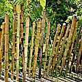 Bamboo Fencing by Lilliana Mendez