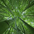 Bamboo Forest 2 by M Swiet Productions