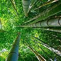 Bamboo Forest by Alex Snay