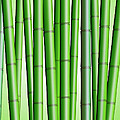 Bamboo Forest Background 2 by David Gn
