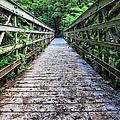 Bamboo Forest Bridge by Edward Fielding