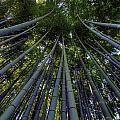 Bamboo Forest Verticle by Matt Swinden