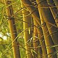 Bamboo Gold by Jade Moon
