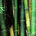 Bamboo Graffiti Pano - Sichuan Province by Anna Lisa Yoder