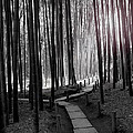 Bamboo Grove At Dusk by Larry Knipfing