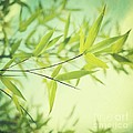 Bamboo In The Sun by Priska Wettstein