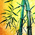 Bamboo Magic by Nirdesha Munasinghe