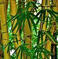 Bamboo Of Hawaii by Craig Wood
