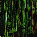 Bamboo by Paulette B Wright