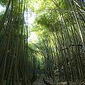 Bamboo Road by Aaron Bedell