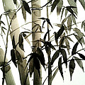 Bamboo by Sepideh Prs