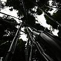 Bamboo Skies 3 by Jennifer Bright