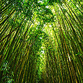 Bamboo Sky - The Magical And Mysterious Bamboo Forest Of Maui. by Jamie Pham