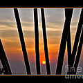 Bamboo Sunset - Black Frame by Kaye Menner