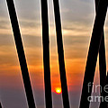 Bamboo Sunset by Kaye Menner