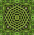 Bamboo Symmetry by Shannon Story