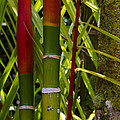 Bamboo Too All Profits Go To Hospice Of The Calumet Area by Joanne Markiewicz