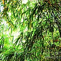 Bamboo Tree by Esther Rowden