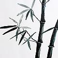 Bamboo Tree by Nirdesha Munasinghe