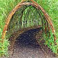 Bamboo Tunnel by Olivier Le Queinec