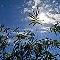 Bamboo Under The Sun by To-Tam Gerwe