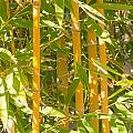 Bamboo Vertical by Christina Rahm